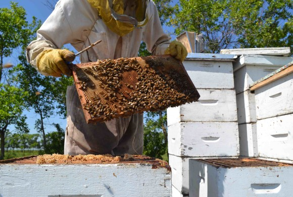 Backyard Beekeeping Workshop Series